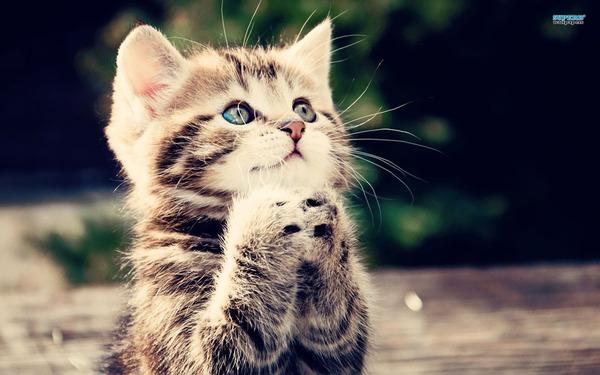 かわいい子猫画像336