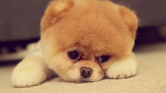 かわいい子犬画像134