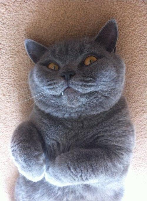 変顔 動物 犬 猫41