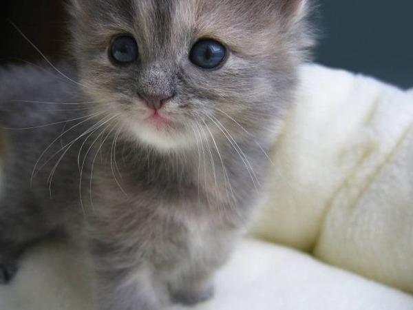 可愛い子猫画像8