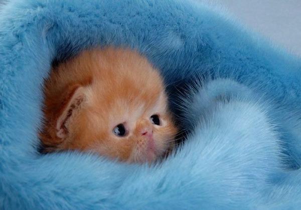 可愛い子猫画像21