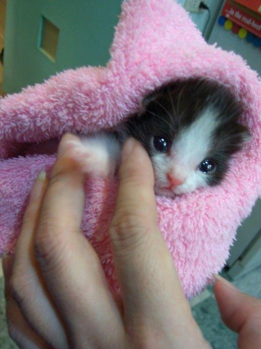 可愛い子猫画像29