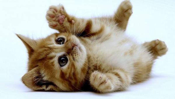 可愛い子猫画像5