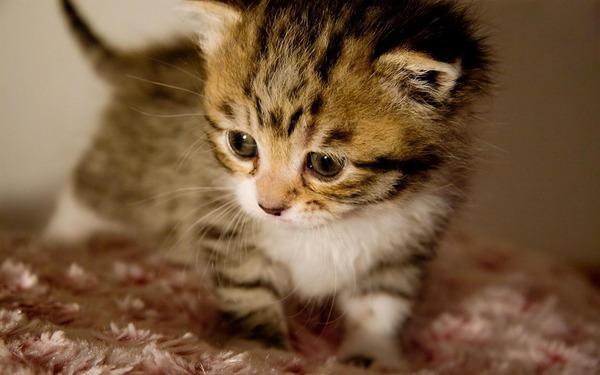 かわいい子猫画像332