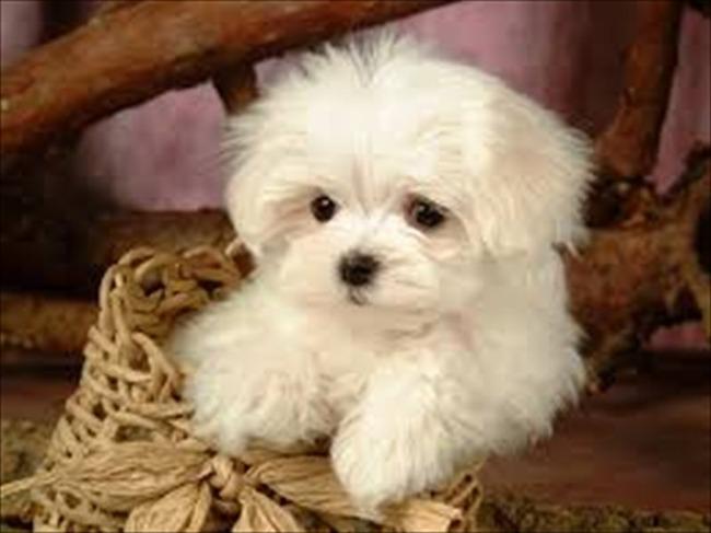 かわいい子犬画像85