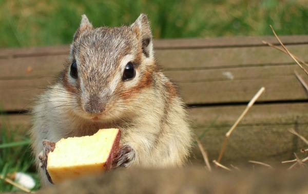 귀여운 다람쥐 8