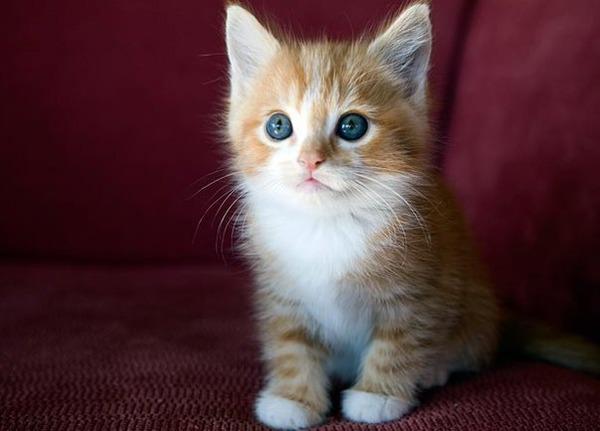 かわいい子猫画像31