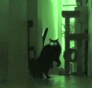 怖い心霊動画0