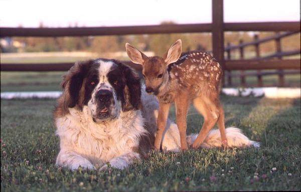 動物仲良し可愛い画像38