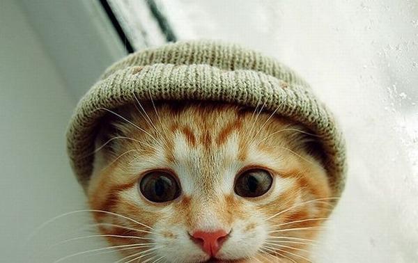 可愛い子猫画像19