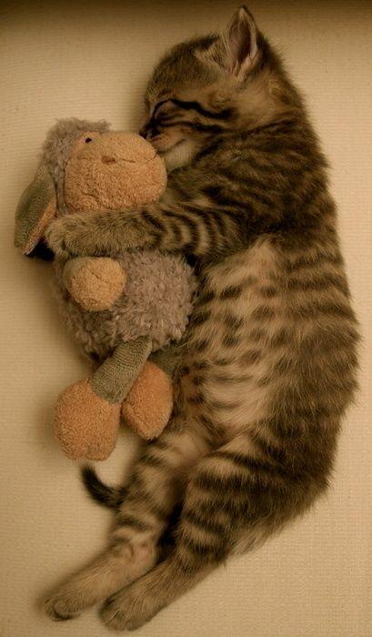 可愛い子猫画像36