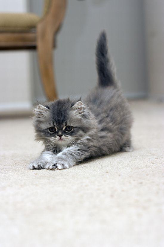 かわいい子猫画像211
