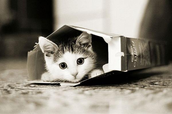 可愛い子猫画像7