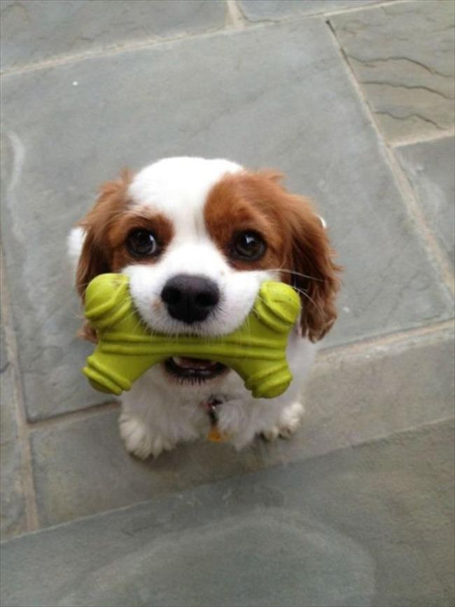 かわいい子犬画像78