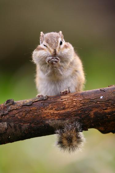 귀여운 다람쥐 6