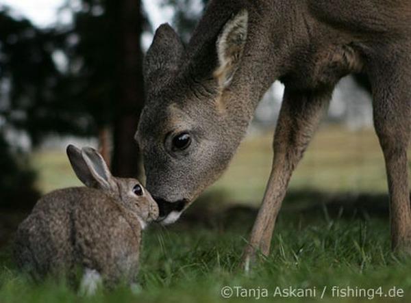 動物仲良し可愛い画像29