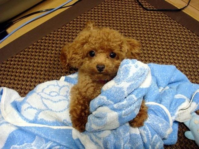 かわいい子犬画像26