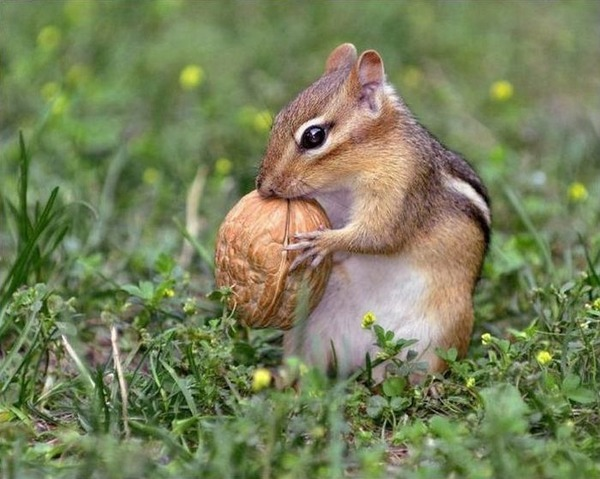 귀여운 다람쥐 58