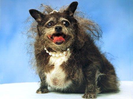 最も醜い犬005