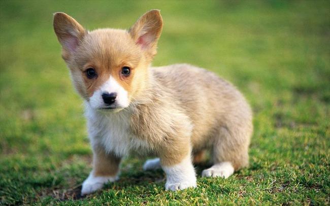 かわいい子犬画像46