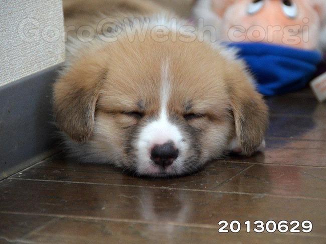 かわいい子犬画像98