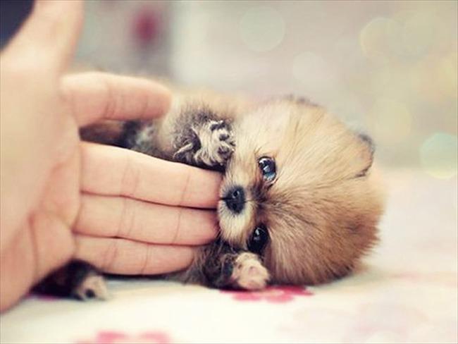 かわいい子犬画像43