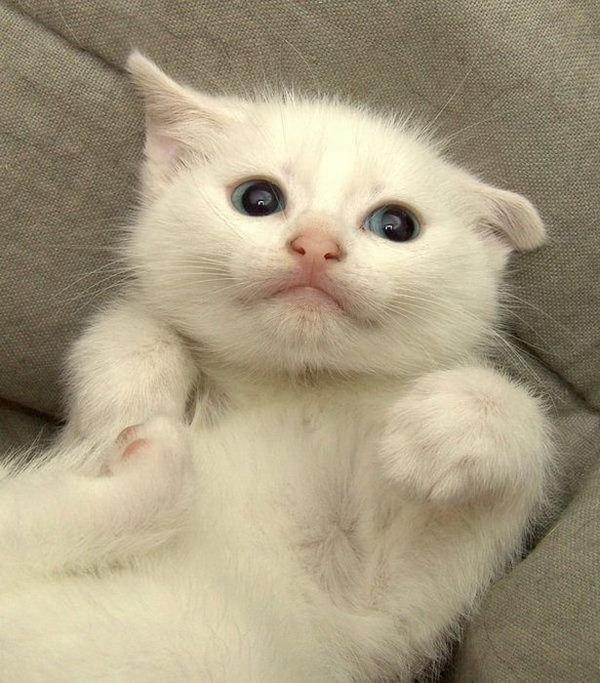可愛い子猫画像28