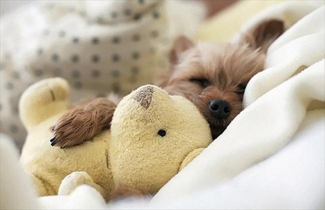 かわいい子犬画像132