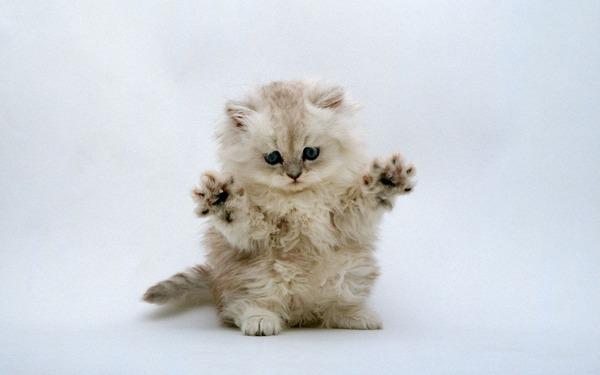 かわいい子猫画像329