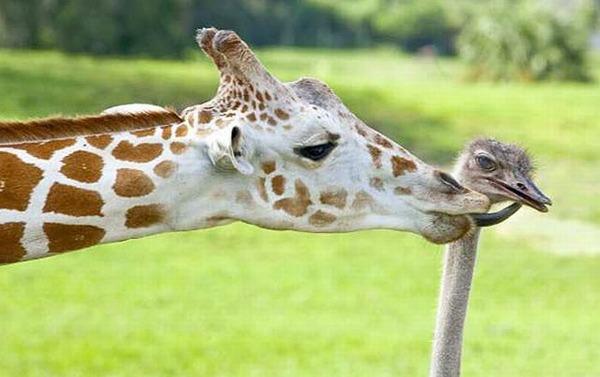 動物仲良し可愛い画像60