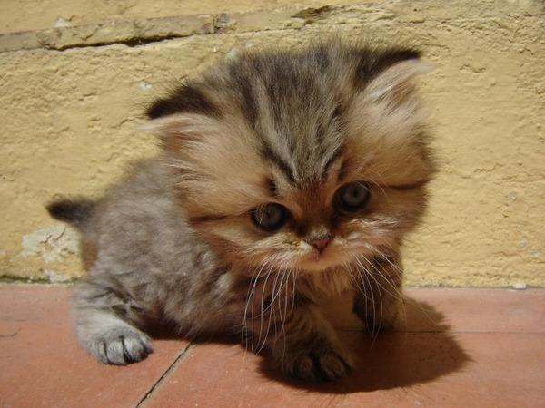 可愛い子猫画像18