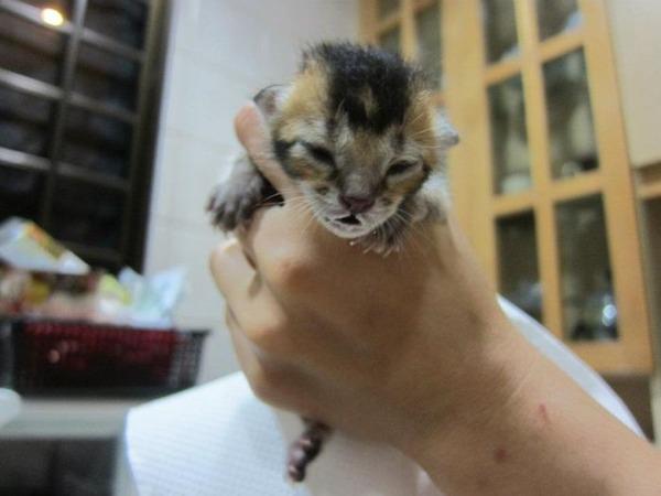 子猫 保護3
