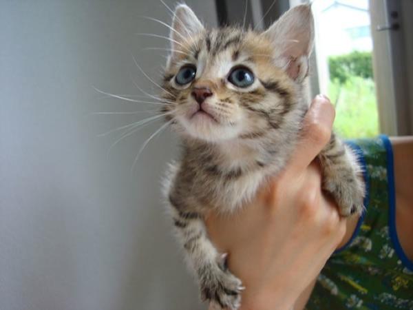 かわいい子猫画像35