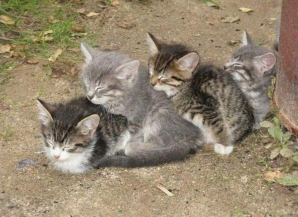 可愛い子猫画像9