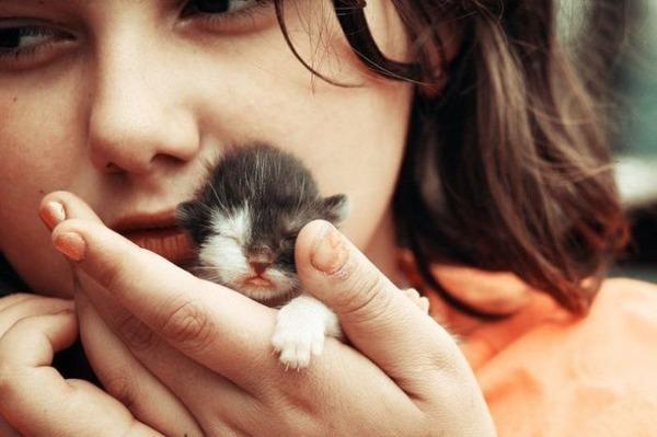 可愛い子猫画像23