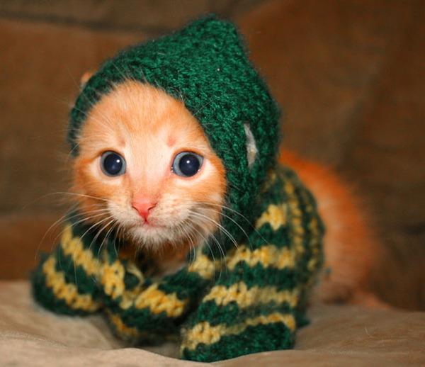 かわいい子猫画像314