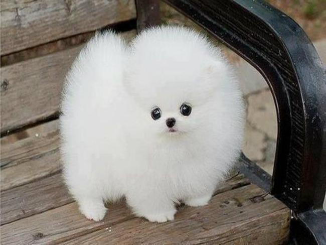 かわいい子犬画像107