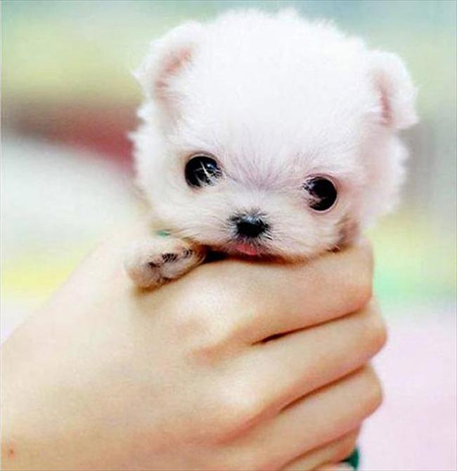 かわいい子犬画像41
