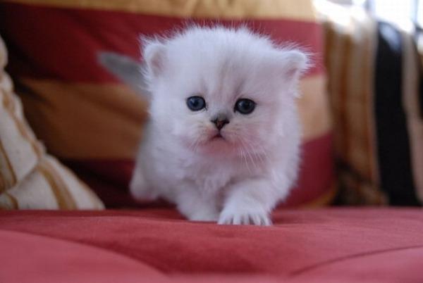 かわいい子猫画像26