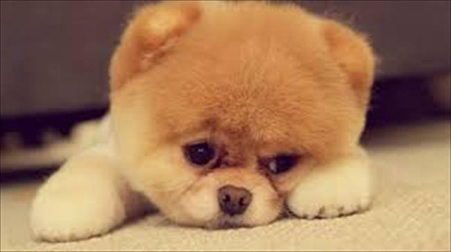 かわいい子犬画像89