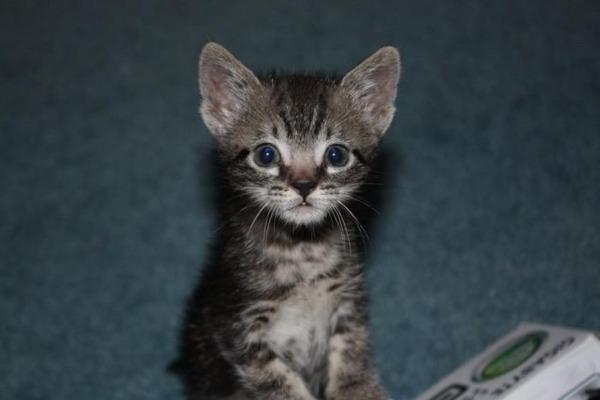 可愛い子猫画像40