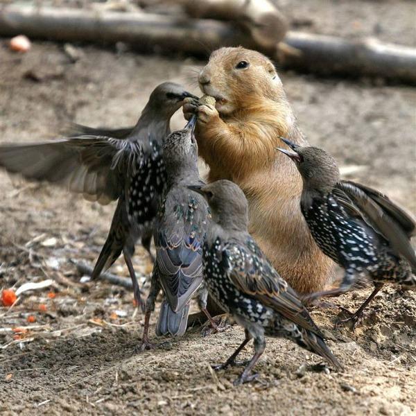 動物仲良し可愛い画像20