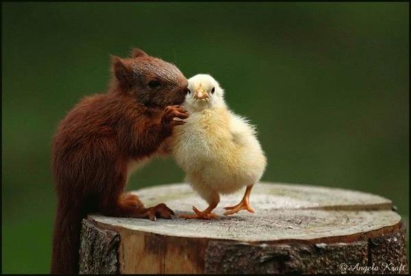 動物仲良し可愛い画像13