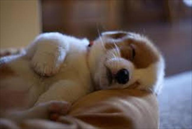 かわいい子犬画像86