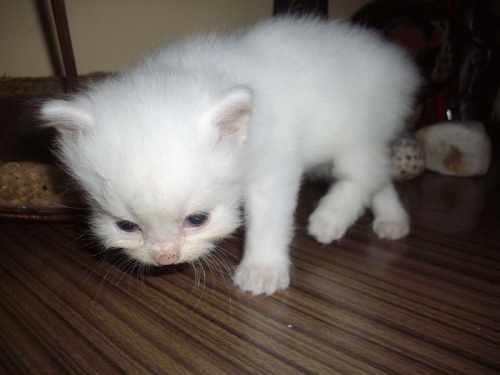 かわいい子猫画像34