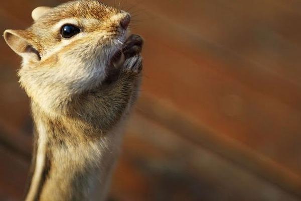 귀여운 다람쥐 26