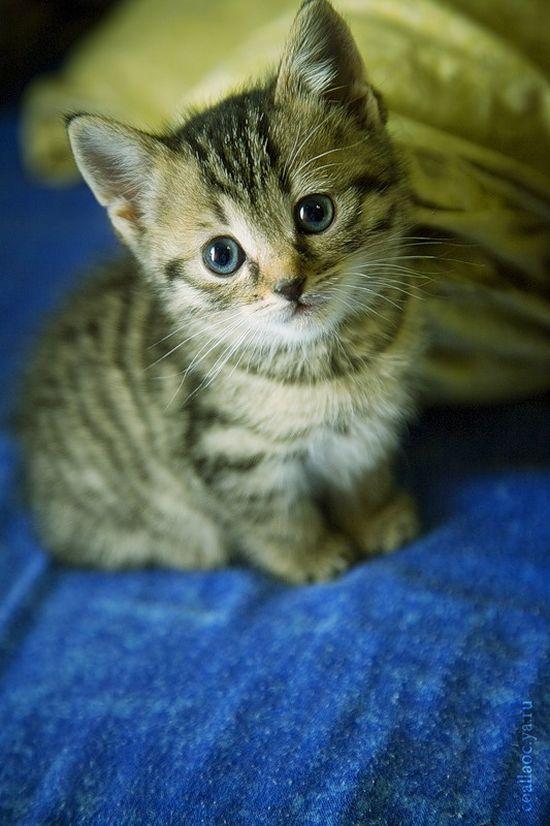 かわいい子猫画像20