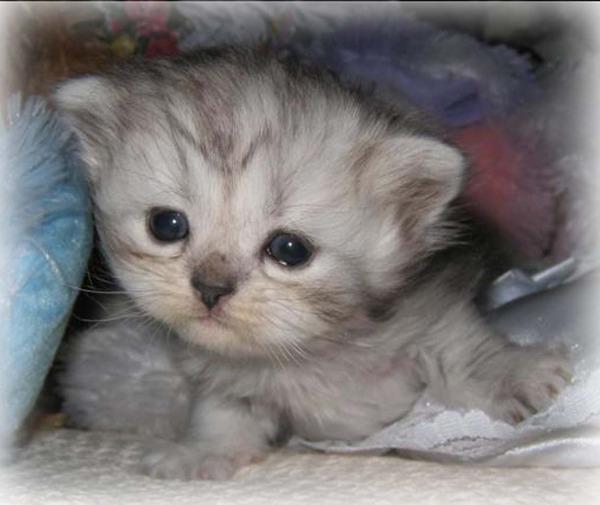 かわいい子猫画像313