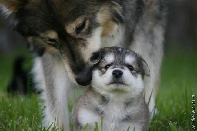 かわいい子犬画像64