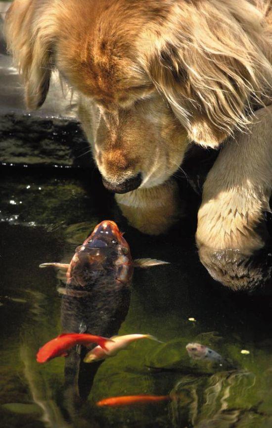 動物仲良し可愛い画像26